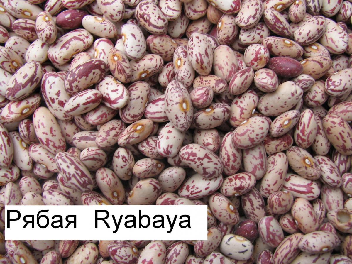Рябая
